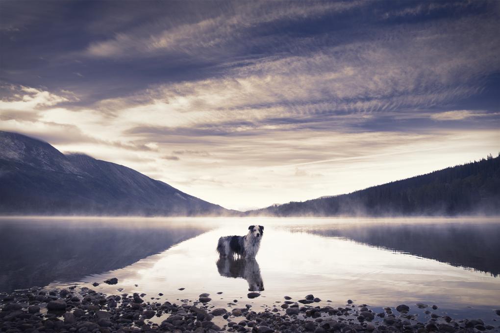Sunrise Swim by Devon Budd