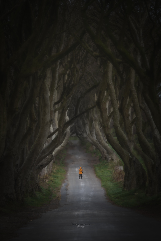 Walking out of the darkness by Roar Edvin Folland