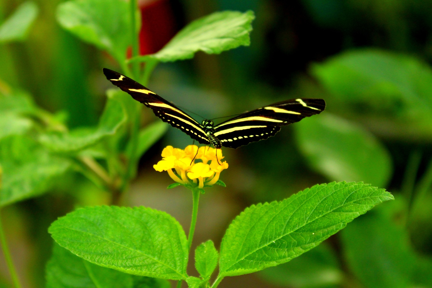 Yellow Butterfly by Keir Mayo