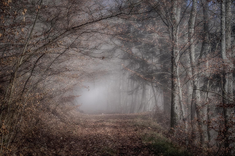 Hidden trees by Marc Doudiet
