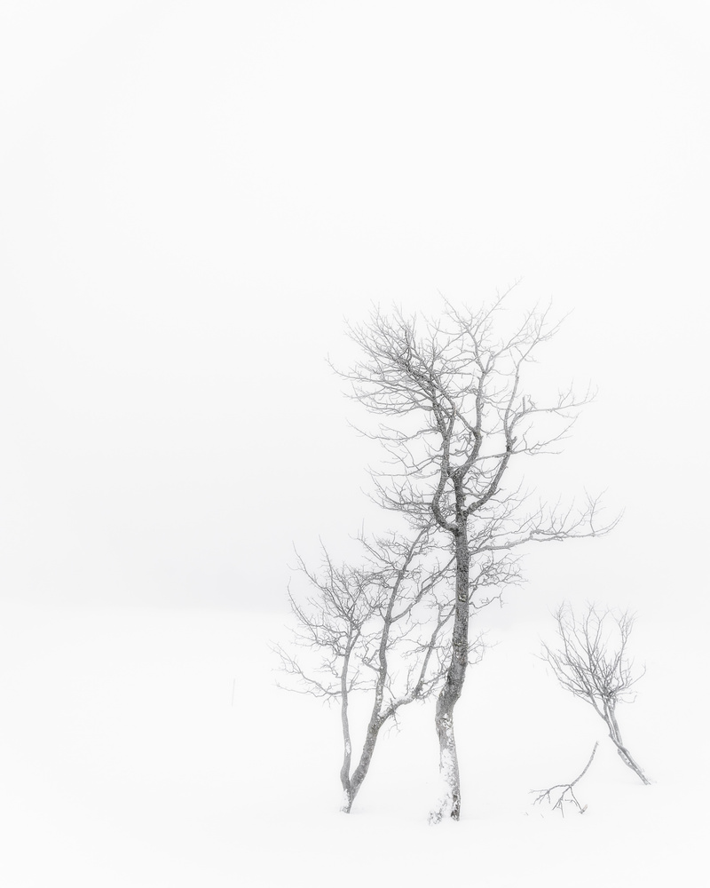 Simple tree by Marc Doudiet