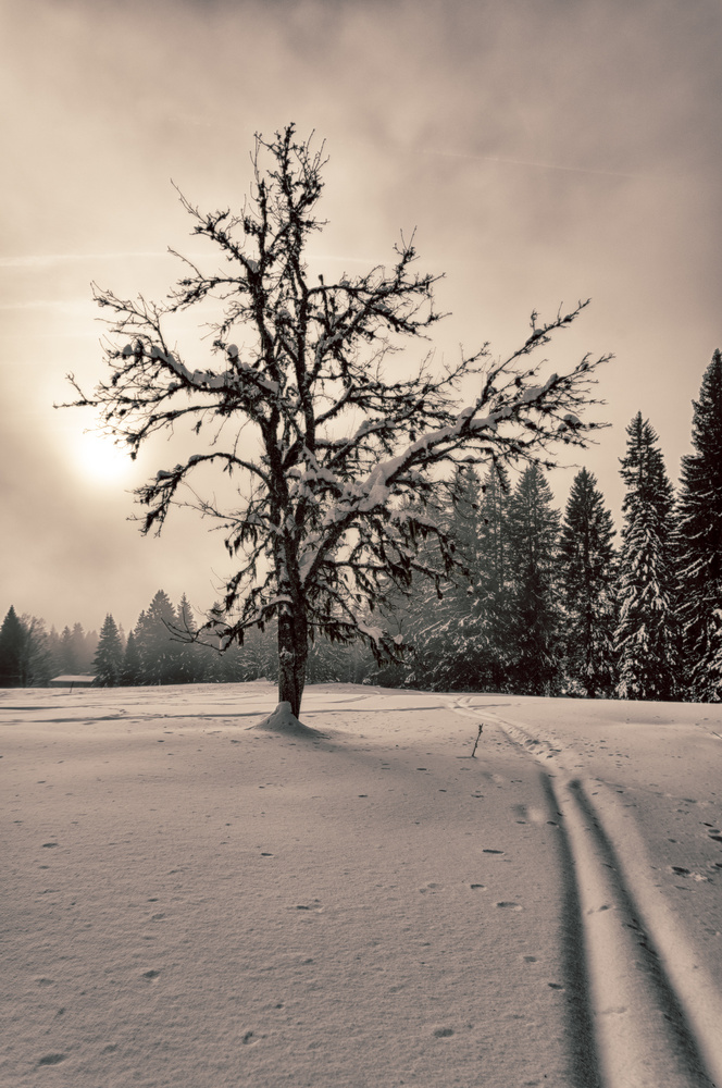 Tree on snow at sunrise by Marc Doudiet