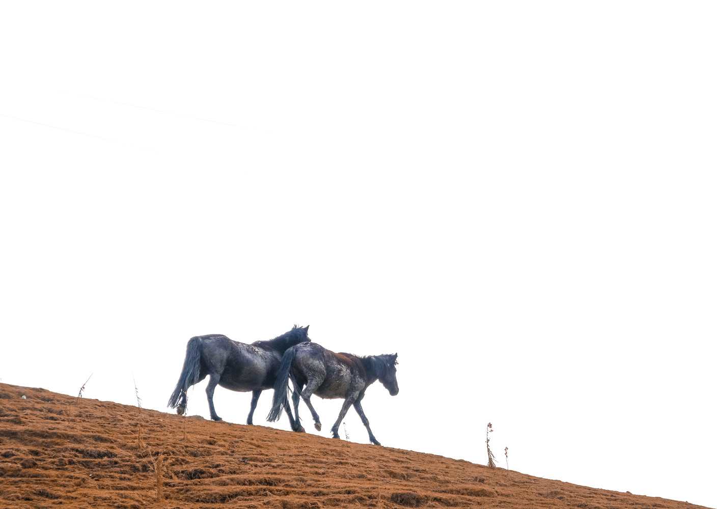 Going down the hill. Are we? by Ashish Ranjan