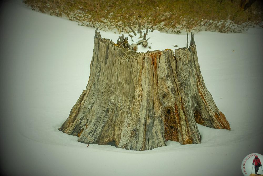 Dead stem over snow by Ashish Ranjan