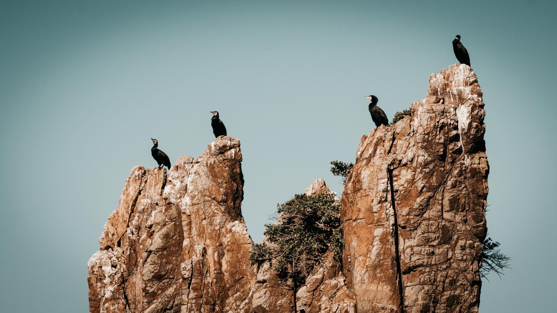 Cormorants by Vivien rK