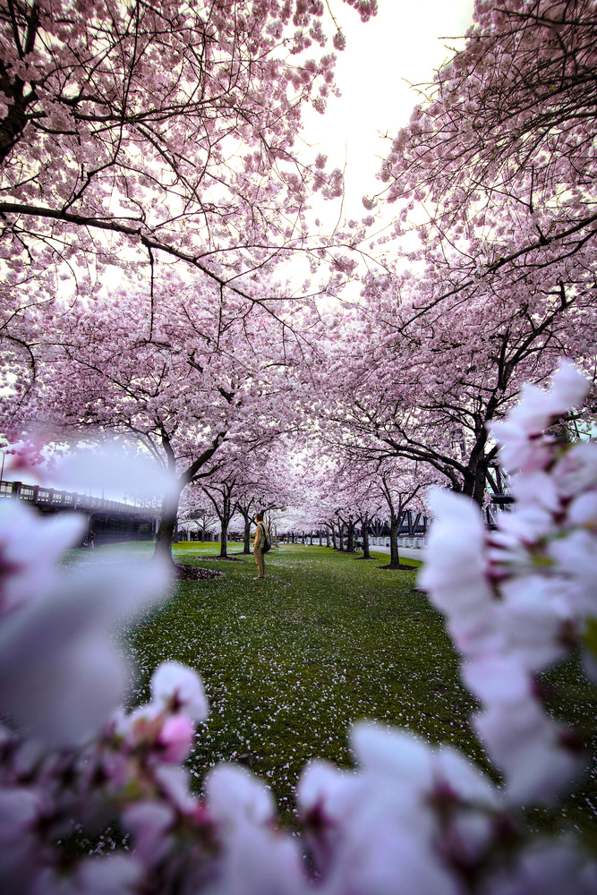 Spring in Portland by Marshall Hall