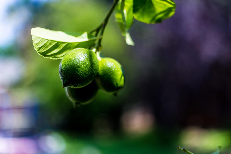 Lemon by Sameer Sethi