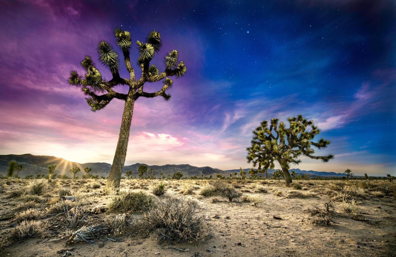 Joshua Tree Time Blend by Daniel Wishard