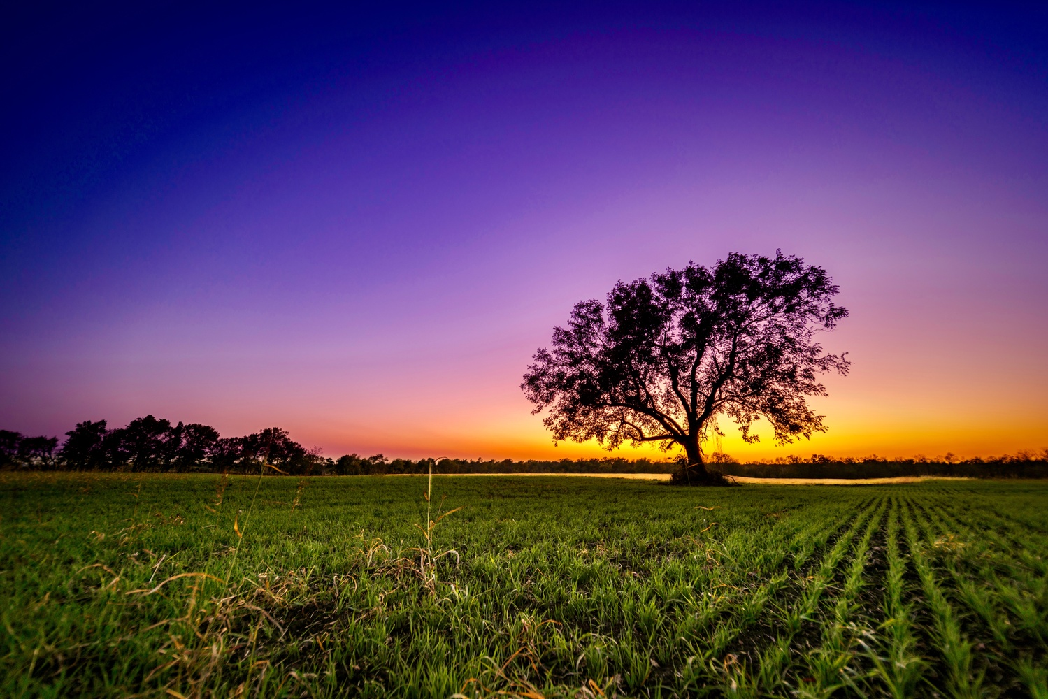 Lone Tree Sunset by Daniel Wishard