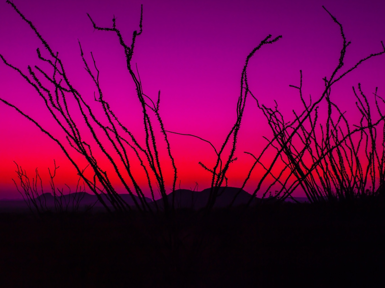 Ocotillo Sunrise by Daniel Wishard