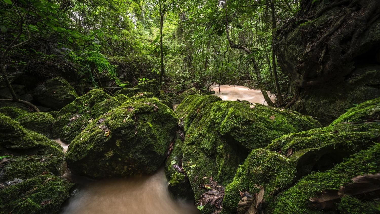 Honduras Mossy Rocks by Daniel Wishard