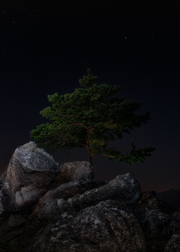 Solitree by Martin Balko