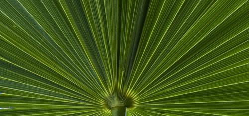 Verde by Taylor Noland