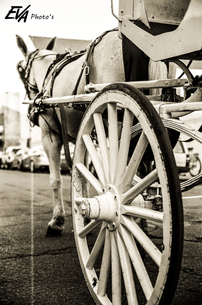 Horse and Cart by Eric VanArsdale