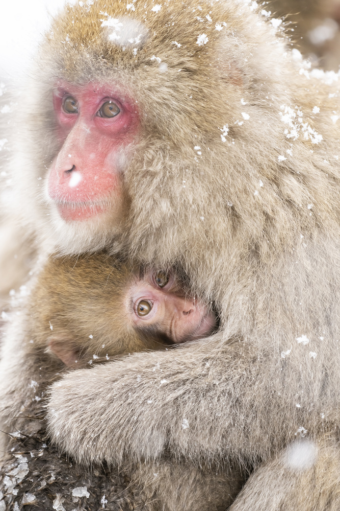 Mothers Love by kousuke kitajima
