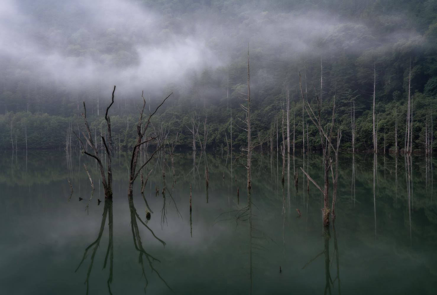 Dead tree grave by kousuke kitajima