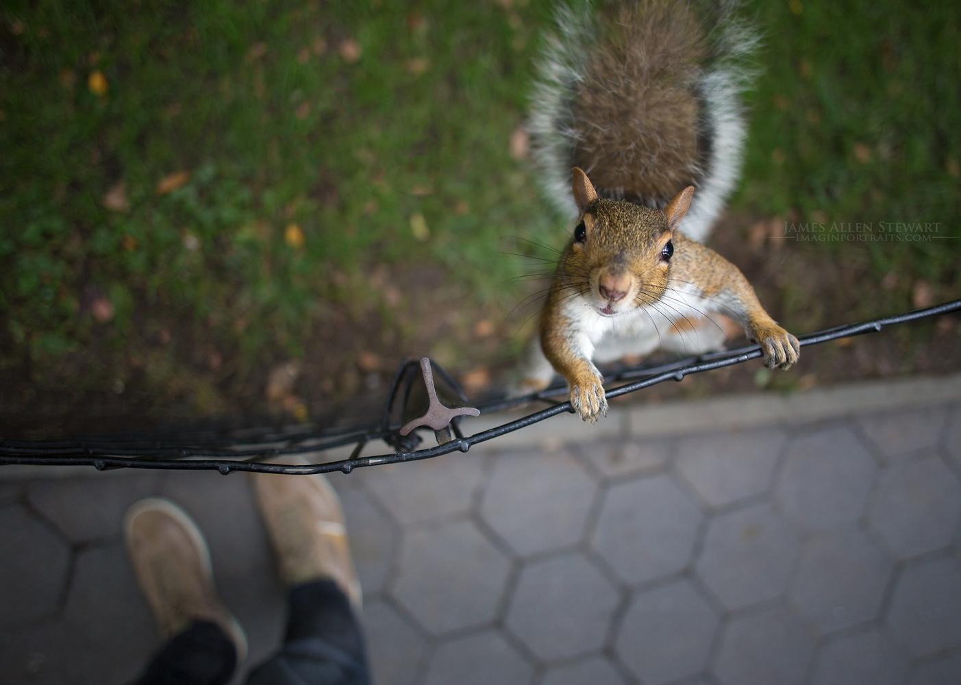 Hello Human! Got Nuts? by James Allen Stewart