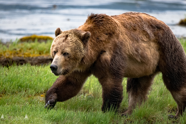 Big Bear by Bodkin's Best Photography