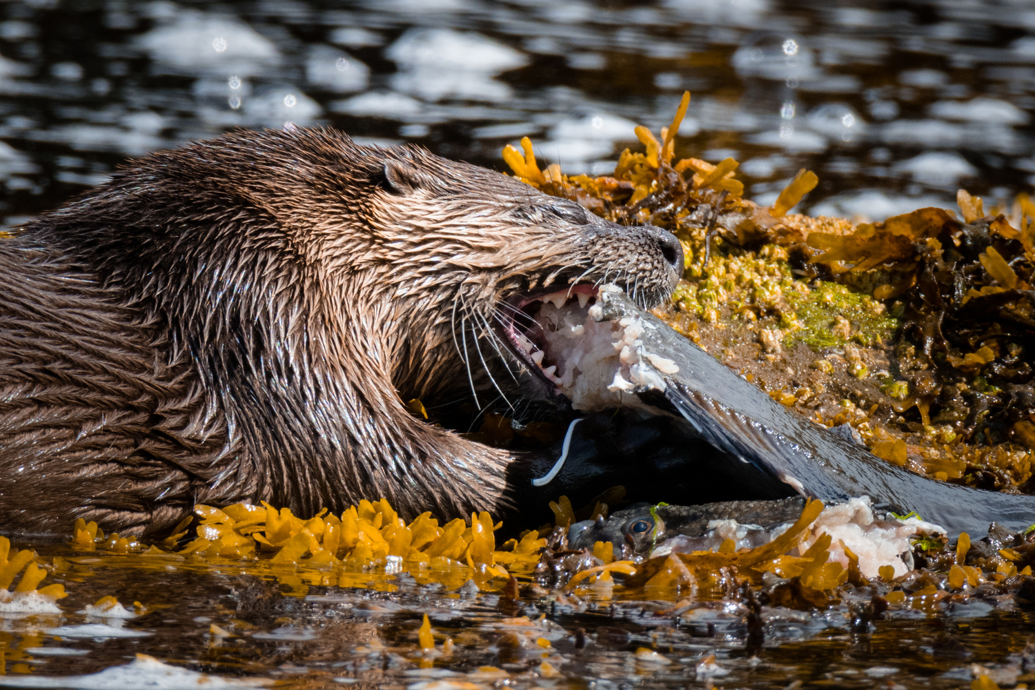 Why I Otter by Bodkin's Best Photography