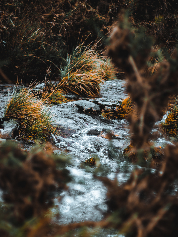 fresh water by Tiago Fernandes
