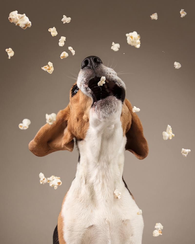 Popcorn Frenzy by Rhiannon Buckle