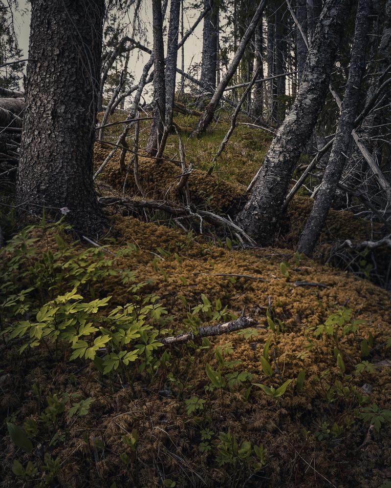 Untitled 3 by Terje Selstad