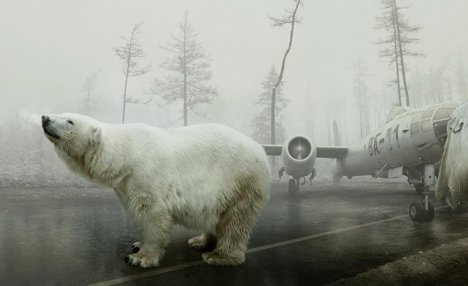 Bear With Me by Martin Stranka