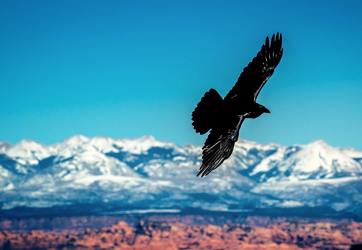 Raven by Dave McMahan