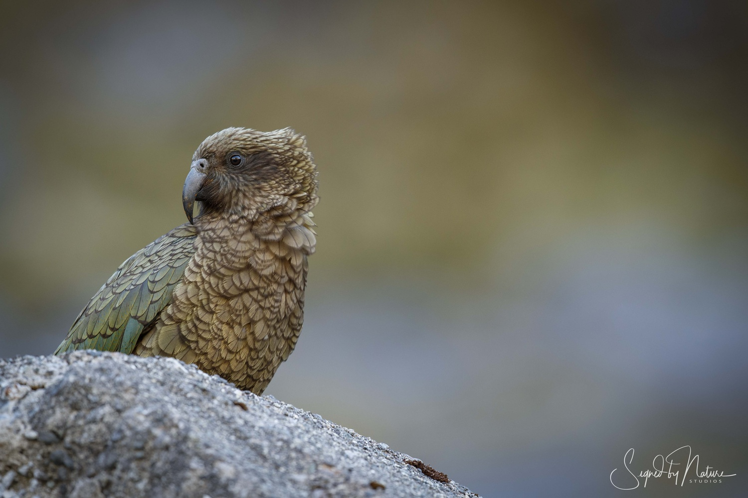 Kea by Russell Hunter