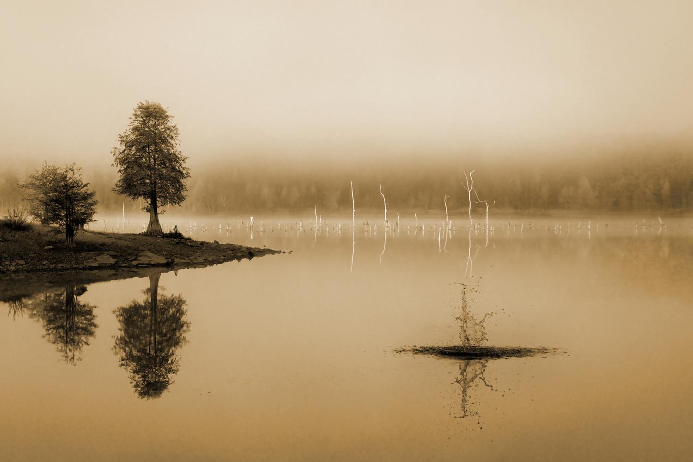 Summer by Mark Riedy