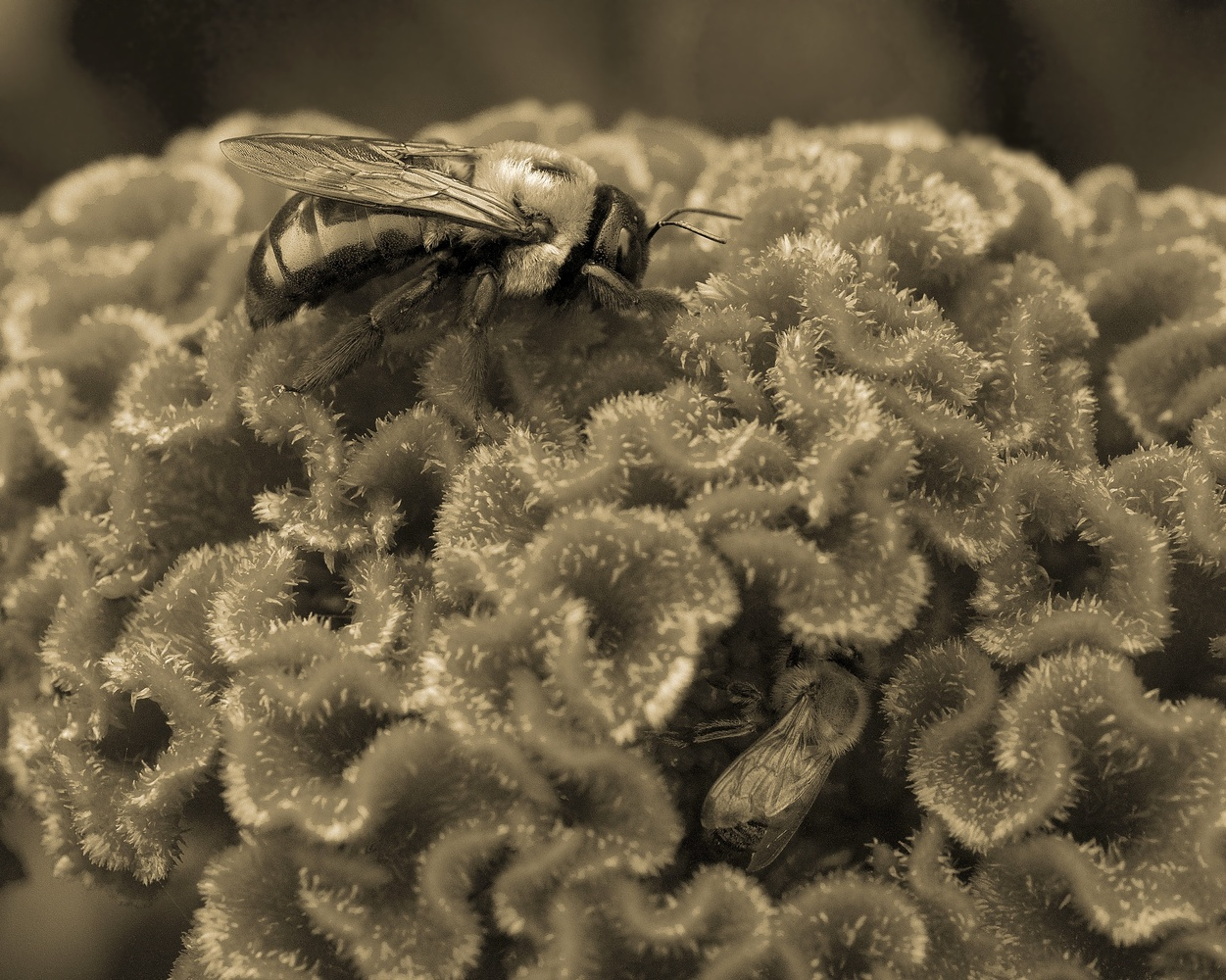 Bees by Mark Riedy