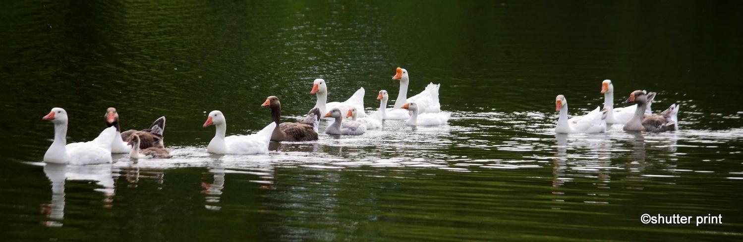 Family Swim by Pam Stewart