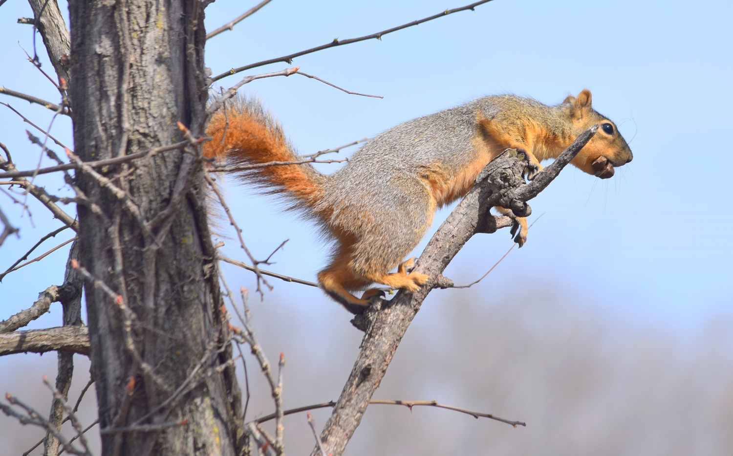 Gathering Nuts by Pam Stewart