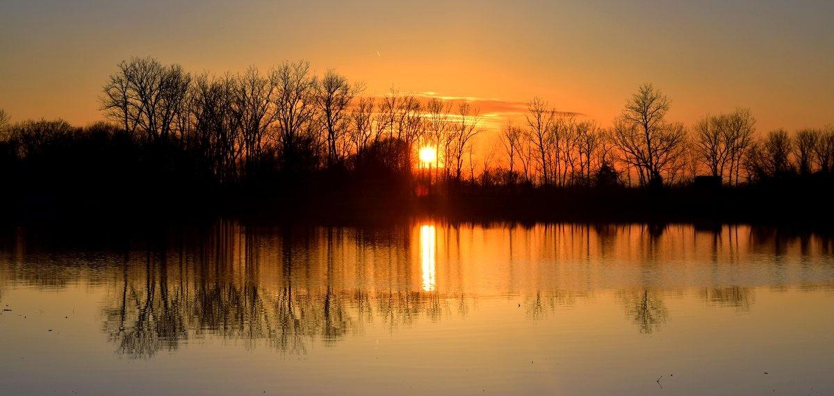 Golden Reflection by Pam Stewart