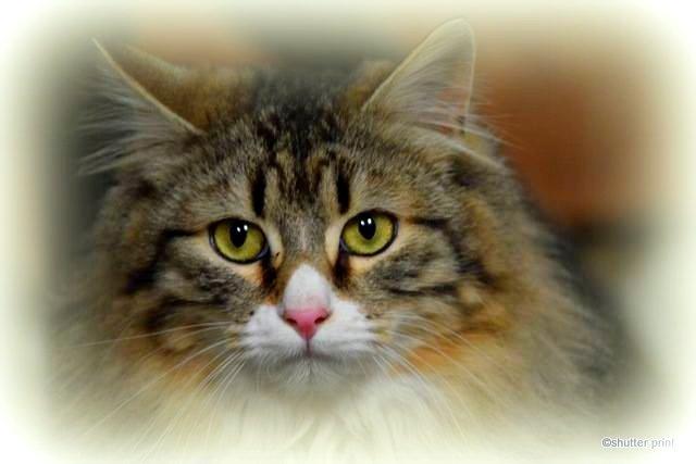 Fluffy Cat by Pam Stewart