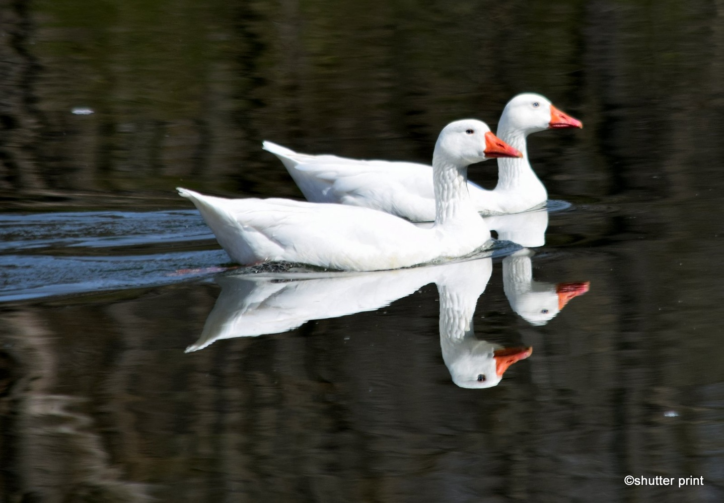 Double Vision by Pam Stewart