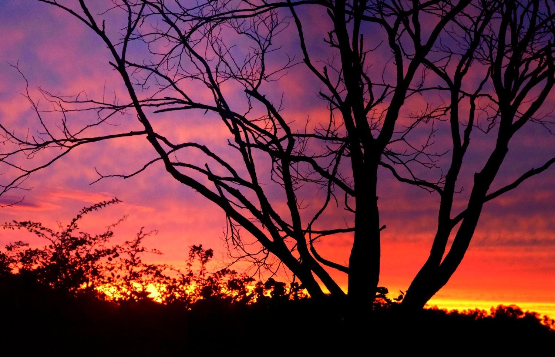Sky on Fire by Pam Stewart