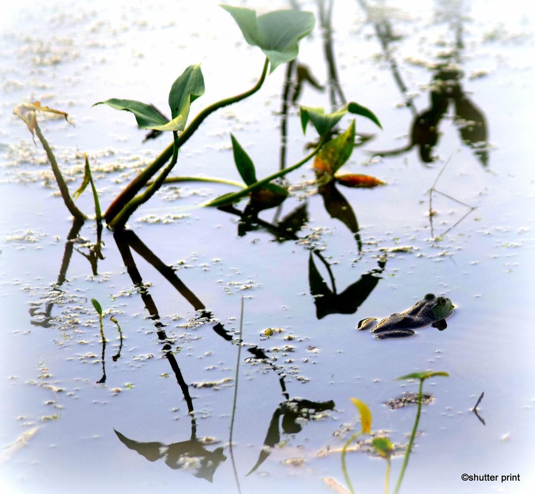 Lake Reflection by Pam Stewart