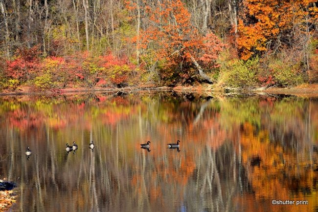 Fall on the Lake by Pam Stewart
