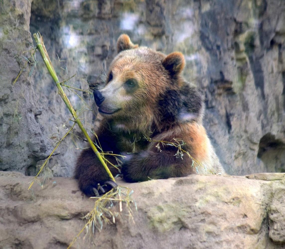 Bear Time by Pam Stewart