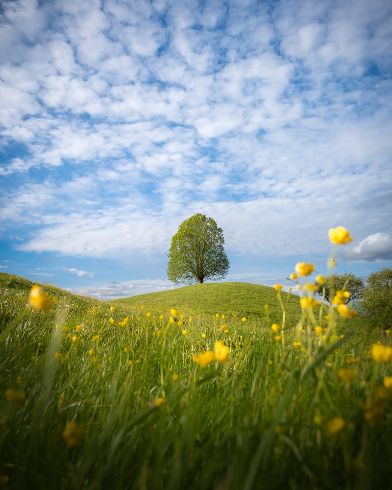 Spring time by Anton Galitch