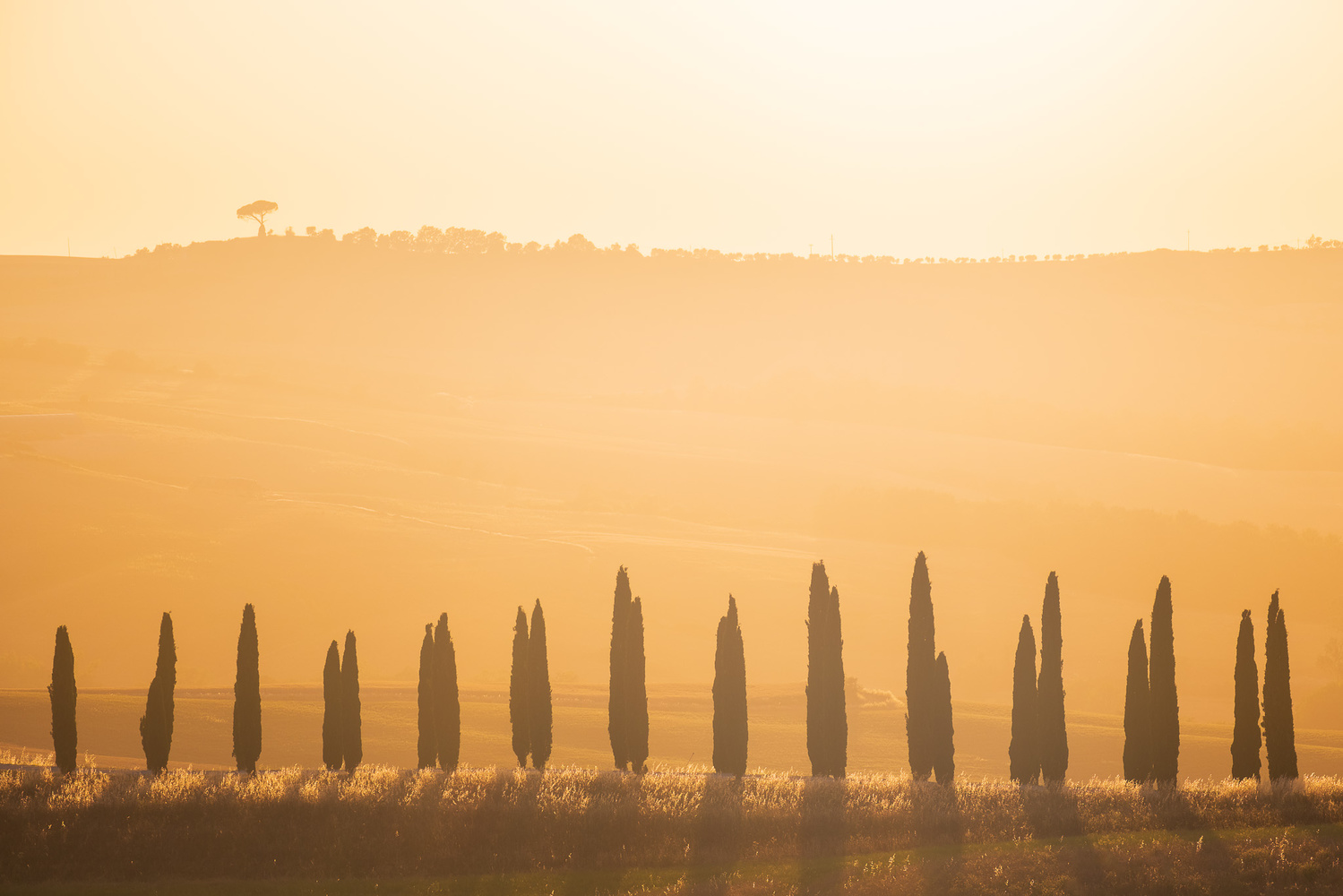 Golden Tuscany by Anton Galitch