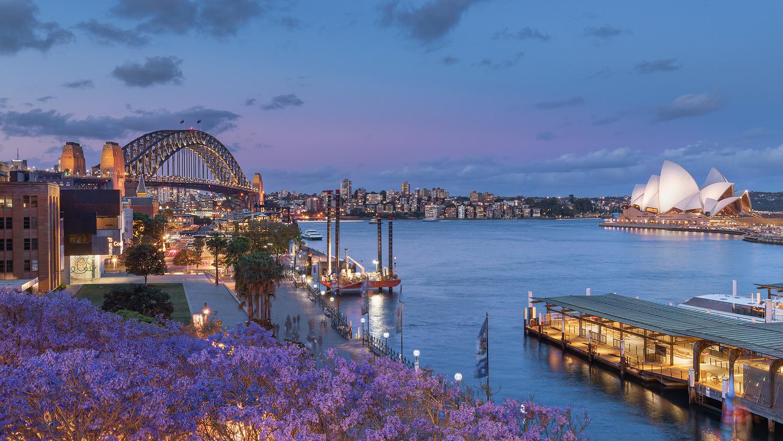 Jacaranda Season in Sydney by Anton Galitch