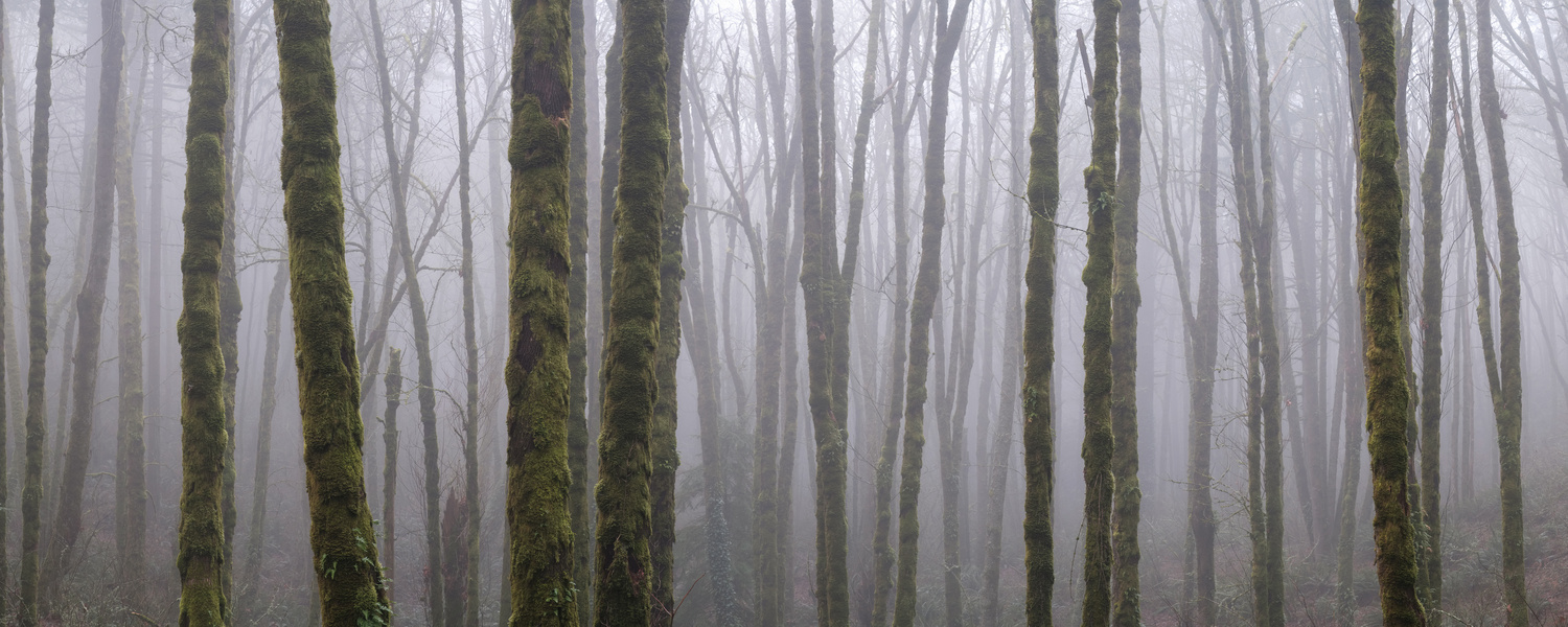 Foggy Forest Panoramic by Compelling Imaging