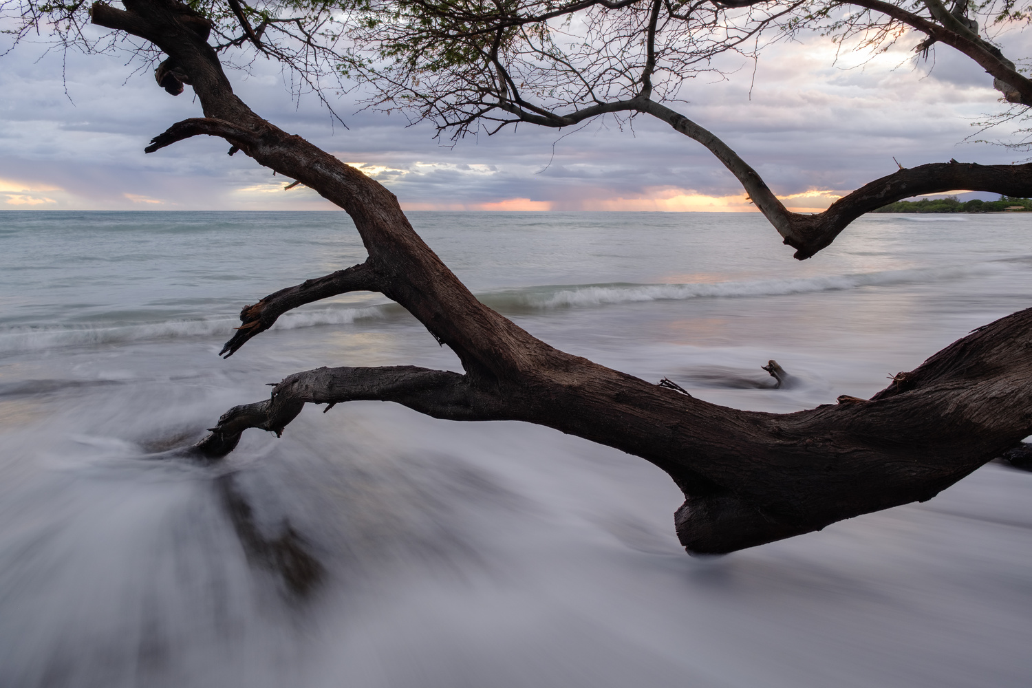 Beach Tree by Compelling Imaging
