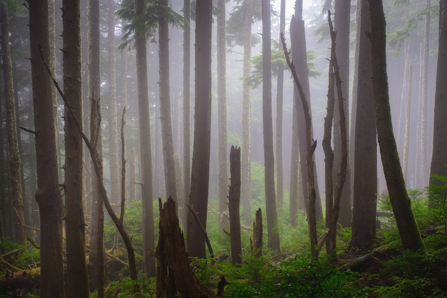 Foggy Forest by Compelling Imaging