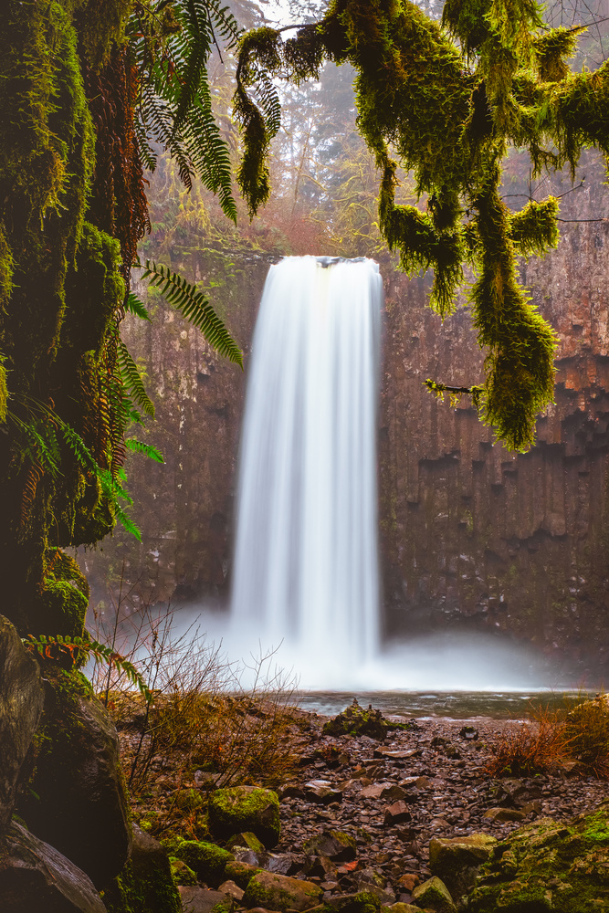Ferns and Falls by Compelling Imaging