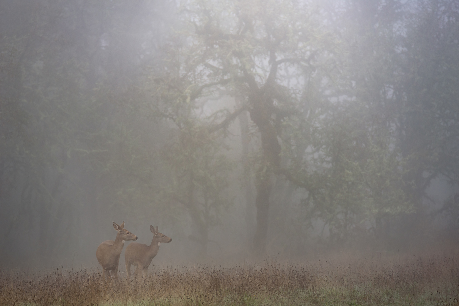 Foggy Morning by Compelling Imaging
