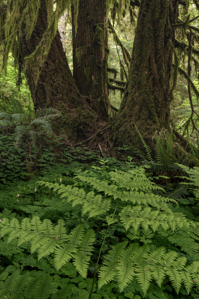 Ferns and Trees by Compelling Imaging