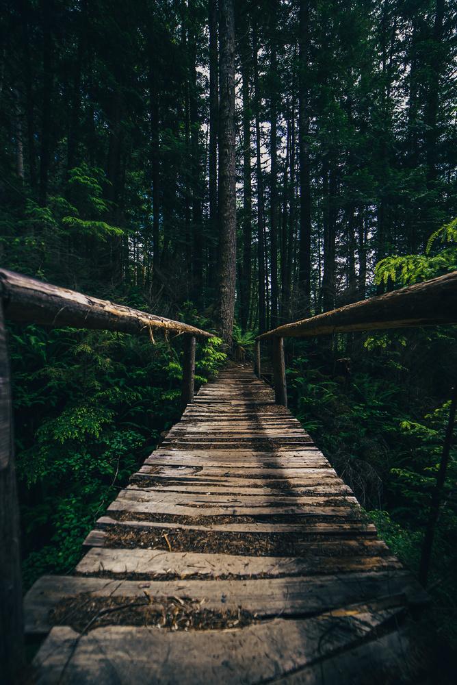 Bridge to Adventures by Tomas Williams